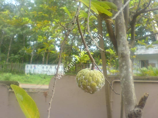 Plants In Kerala
